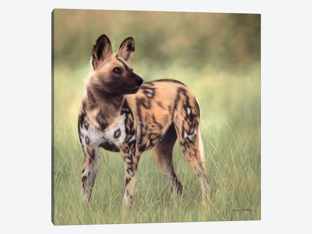 African Wild Dog by Rachel Stribbling 1-piece Canvas Artwork