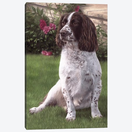 Springer Spaniel In A Garden Canvas Print #SLG75} by Rachel Stribbling Canvas Artwork