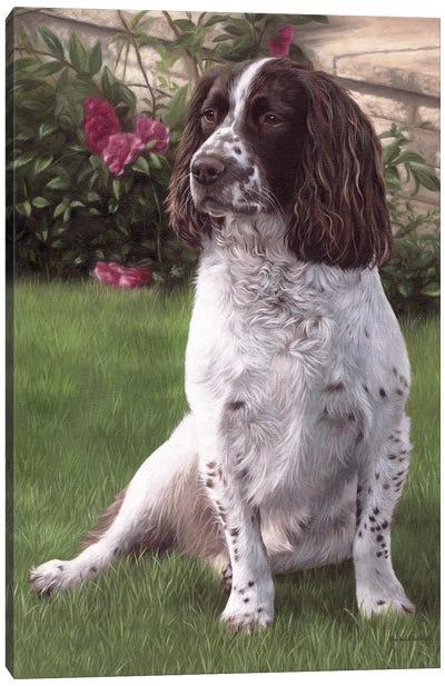 Springer Spaniel In A Garden Canvas Art Print