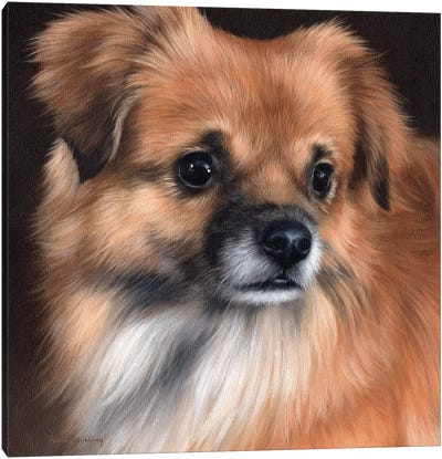 Tibetan Spaniel Portrait Canvas Art Print