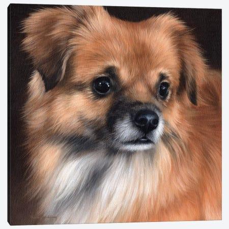 Tibetan Spaniel Portrait Canvas Print #SLG76} by Rachel Stribbling Canvas Wall Art