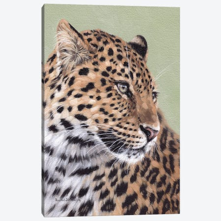 Leopard Canvas Print #SLG79} by Rachel Stribbling Canvas Art Print