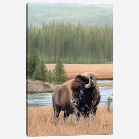 American Bison Canvas Print #SLG7} by Rachel Stribbling Canvas Artwork