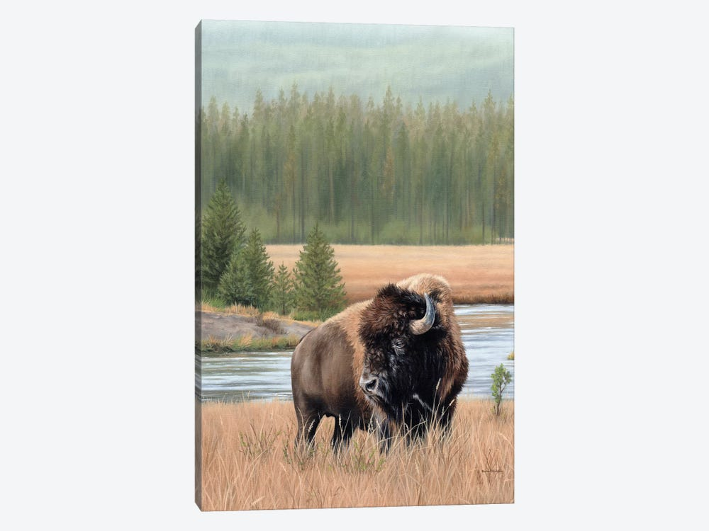 American Bison by Rachel Stribbling 1-piece Art Print