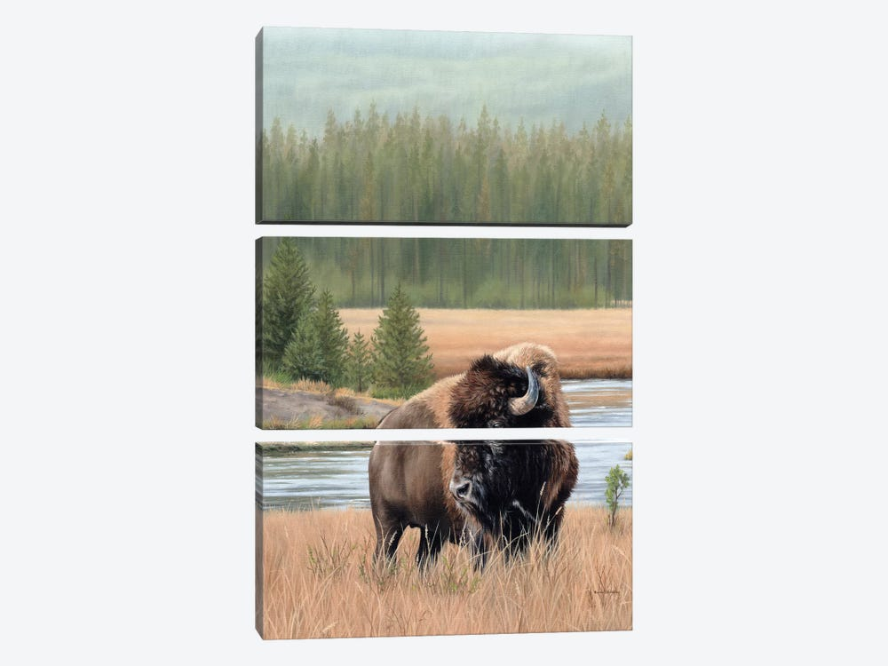 American Bison by Rachel Stribbling 3-piece Canvas Art Print