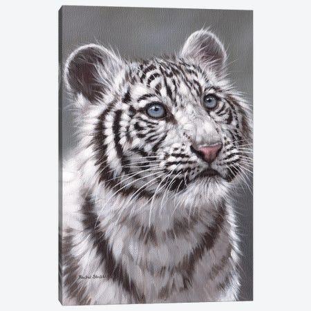 White Tiger Cub Canvas Print #SLG80} by Rachel Stribbling Canvas Artwork