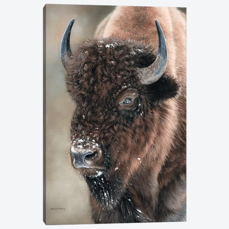 American Bison Portrait Canvas Print #SLG8} by Rachel Stribbling Canvas Print
