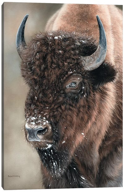 American Bison Portrait Canvas Art Print