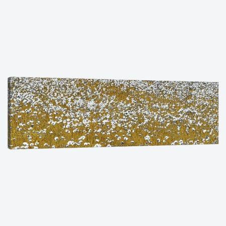 Fields of Gold Canvas Print #SLK19} by Shelley Lake Art Print