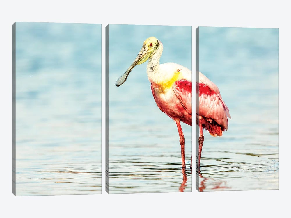 Roseatte Spoonbill by Shelley Lake 3-piece Canvas Wall Art