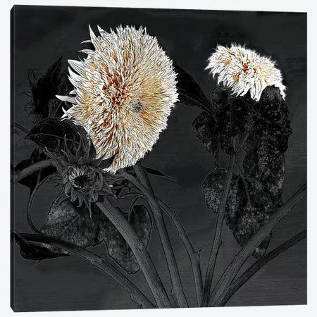 Sunflowers I Canvas Print #SLK36} by Shelley Lake Canvas Artwork