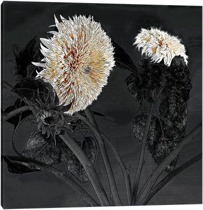Sunflowers I Canvas Art Print