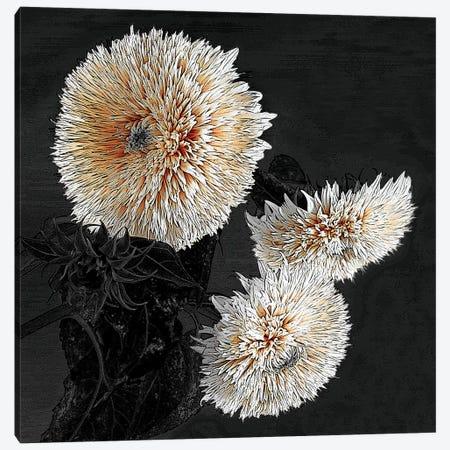Sunflowers II Canvas Print #SLK37} by Shelley Lake Canvas Art