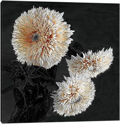 Sunflowers II Canvas Art Print