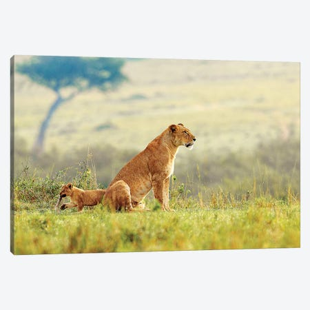 A Lion's Tail Canvas Print #SLK3} by Shelley Lake Canvas Art Print