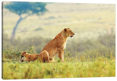 A Lion's Tail Canvas Art Print