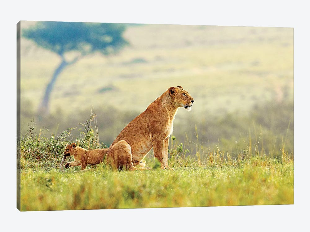 A Lion's Tail by Shelley Lake 1-piece Canvas Art Print