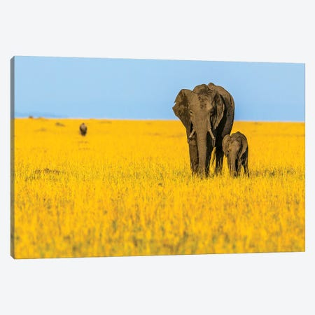 Vibrant Africa Canvas Print #SLK41} by Shelley Lake Canvas Art