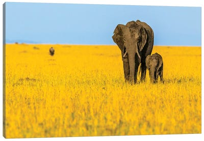 Vibrant Africa Canvas Art Print