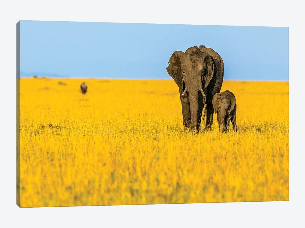 Vibrant Africa by Shelley Lake 1-piece Art Print