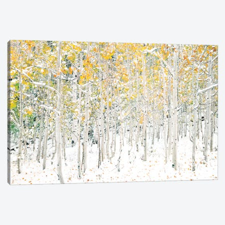 Quaking Aspens Canvas Print #SLK44} by Shelley Lake Canvas Art Print