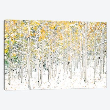 Quaking Aspens 3-Piece Canvas #SLK44} by Shelley Lake Canvas Art Print