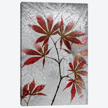 red maple Canvas Print #SLS1} by Secundino Losada Canvas Artwork