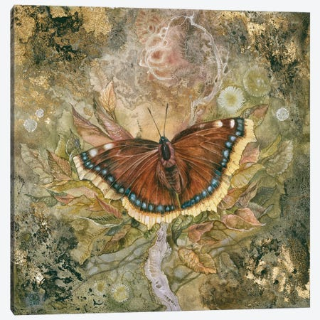 Mourning Cloak Canvas Print #SLW111} by Stephanie Law Canvas Art Print