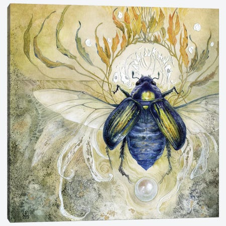 Scarab II Canvas Print #SLW134} by Stephanie Law Canvas Art