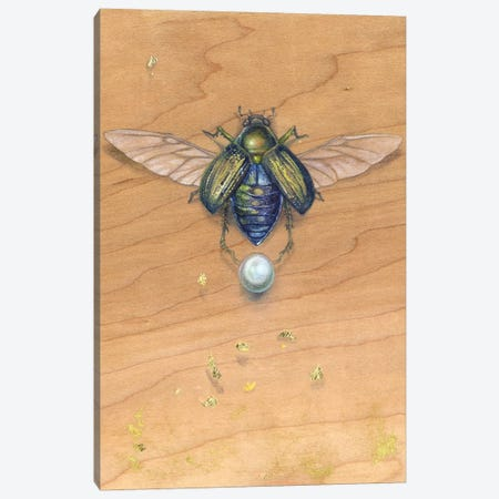 Scarab III Canvas Print #SLW135} by Stephanie Law Canvas Artwork