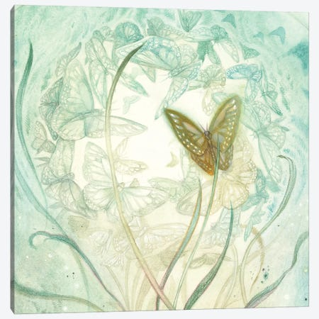 Butterfly II Canvas Print #SLW199} by Stephanie Law Canvas Art Print