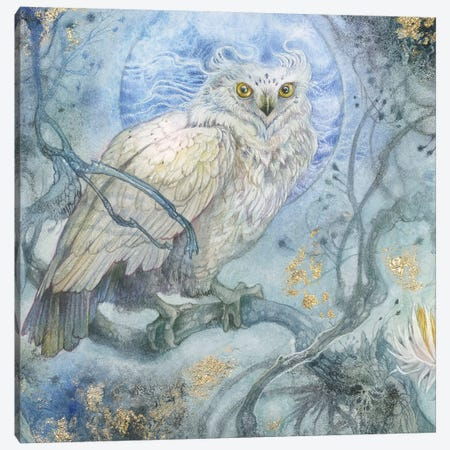 Night Wings I Canvas Print #SLW225} by Stephanie Law Canvas Artwork
