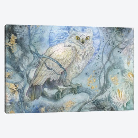 Night Wings II Canvas Print #SLW231} by Stephanie Law Canvas Art