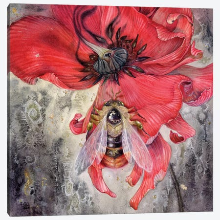 Bumblebee Canvas Print #SLW23} by Stephanie Law Canvas Artwork