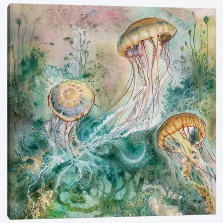 Jellyfish Canvas Print #SLW244} by Stephanie Law Canvas Wall Art