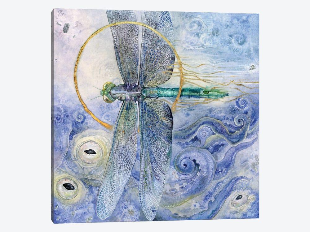 Dragonfly II by Stephanie Law 1-piece Canvas Art