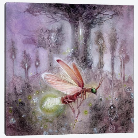 Firefly Canvas Print #SLW65} by Stephanie Law Art Print