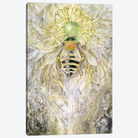 Honeybee II Canvas Print #SLW81} by Stephanie Law Canvas Artwork