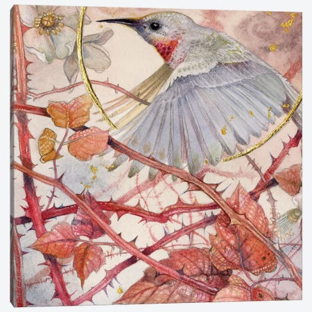 Hummingbird Canvas Print #SLW83} by Stephanie Law Canvas Art