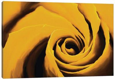 Dirty Yellow Rose Canvas Art Print