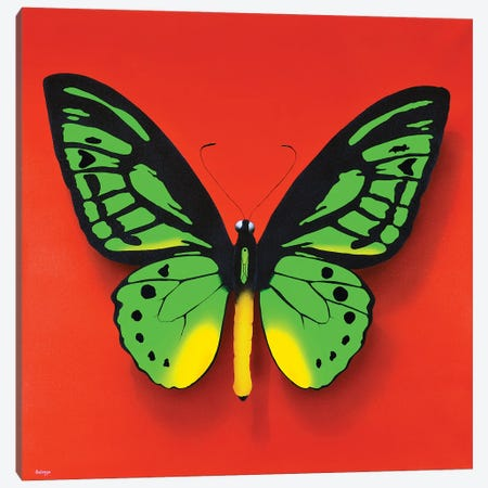 Green Butterfly Canvas Print #SLZ19} by John Salozzo Canvas Artwork