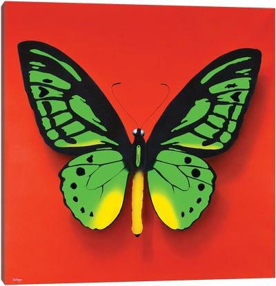 Green Butterfly Canvas Art Print