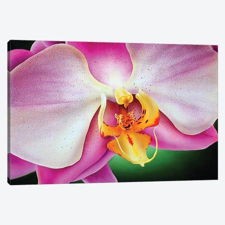 Orchid Canvas Print #SLZ29} by John Salozzo Canvas Art Print