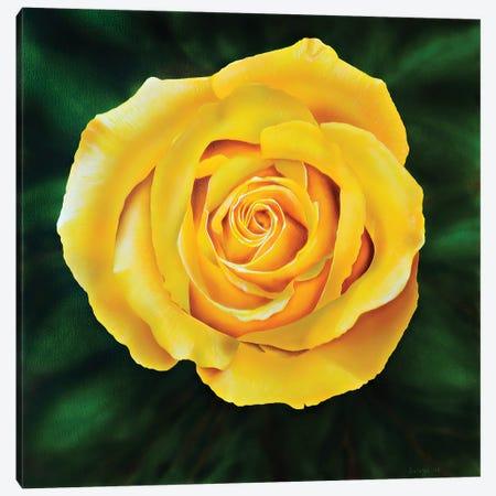 Yellow Rose Canvas Print #SLZ50} by John Salozzo Canvas Wall Art