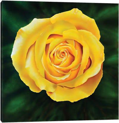 Yellow Rose Canvas Art Print