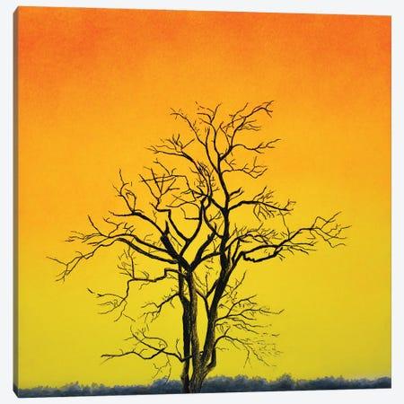 Sunrise Tree Canvas Print #SLZ56} by John Salozzo Art Print