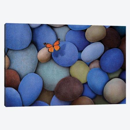 Blue Stones And Butterfly Canvas Print #SLZ6} by John Salozzo Canvas Artwork