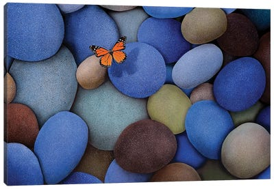 Blue Stones And Butterfly Canvas Art Print