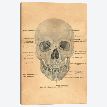 The Skull Diagram Canvas Print #SMD103} by Tea Stained Madness Canvas Art Print