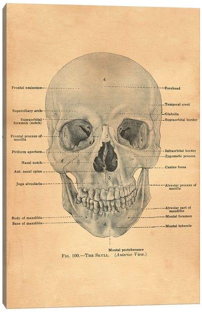 The Skull Diagram Canvas Art Print